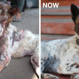 MissionPawsilbe_Before and After_Carol