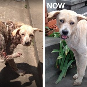 MissionPawsilbe_Before and After_Dora