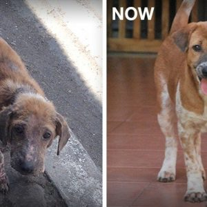 MissionPawsilbe_Before and After_Ginger