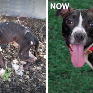 MissionPawsilbe_Before and After_Hero