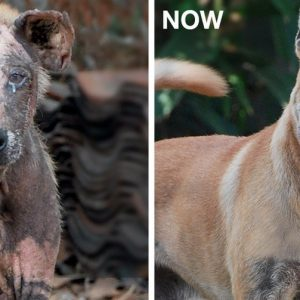 MissionPawsilbe_Before and After_Peanut