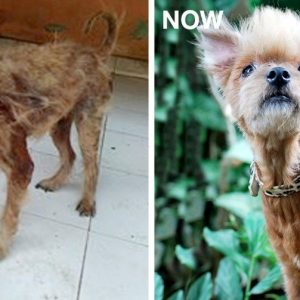MissionPawsilbe_Before and After_Shirley