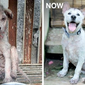 MissionPawsilbe_Before and After_Terry